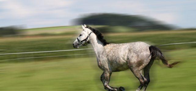 Ein Pferd das buckelt