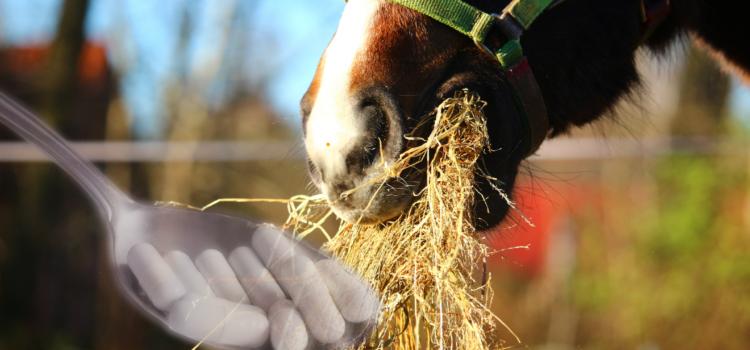 Vitamine, Mineralstoffe und Spurenelemte für das Pferd