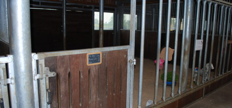 wieviel Platz braucht mein Pferd - wie groß muss eine Pferdebox sein