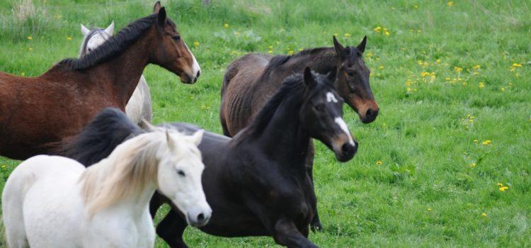 Wieviel-Bewegung-braucht-ein-Pferd-Bewegungsbedarf