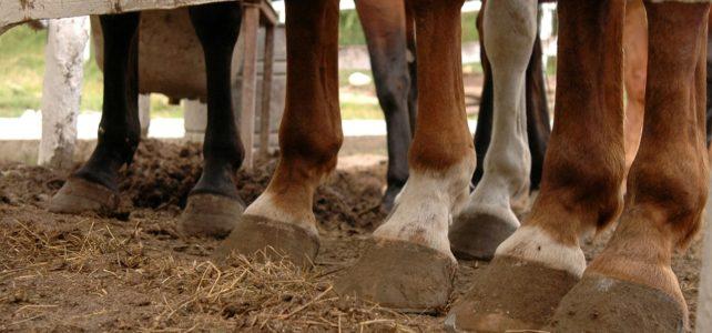 Bandagen oder Gamaschen? – Schutz für Pferdebeine