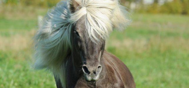 Tipps für gesunde und schöne Pferdepflege – Wie du deinem Pferd Mähne und Schweif pflegst