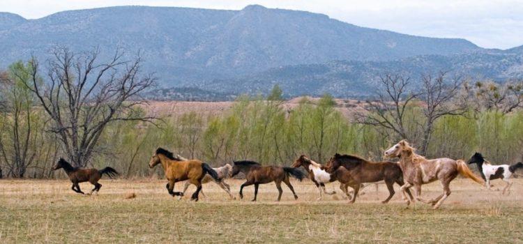 Viele Pferde - doch welches Pferd passt für mich