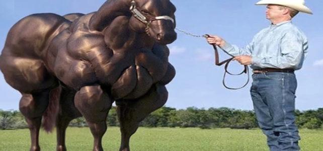 Pferderassen Muskelpferd