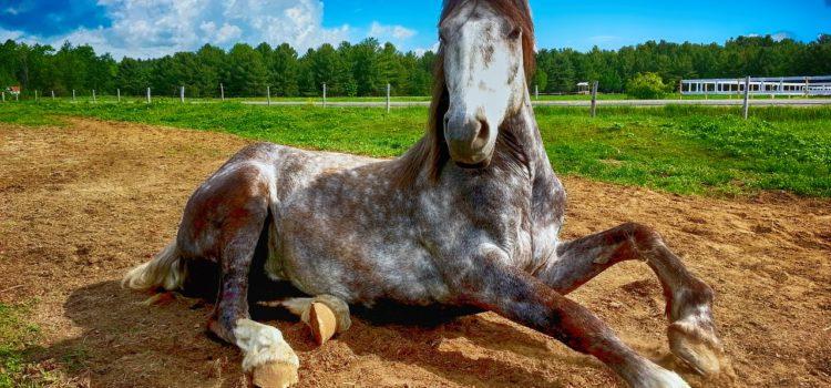 Gadgets für Pferde