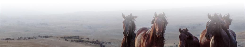 Pferdefreiheit